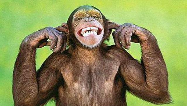 scimmia_sorride-400x300