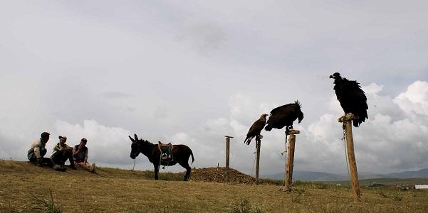 Per i mongoli la fauna è sacra