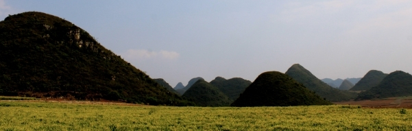 La foresta cinese di Jinji