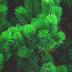 Il bosco di Augusto